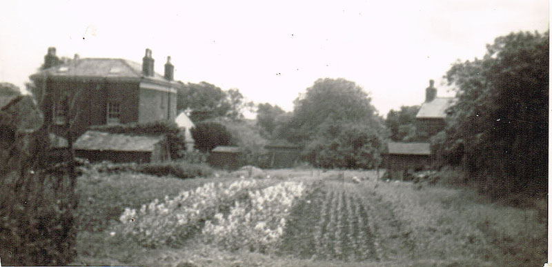 market garden at the rear of the pub